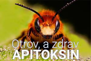 Apitoksin - pčelinji otrov